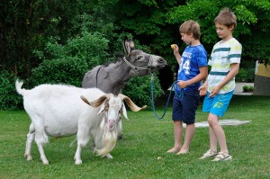 Supersüßer Esel und cooler Ziegenbock